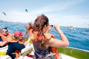 Paquetes turísticos a Paracas