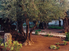 monte-los-olivos